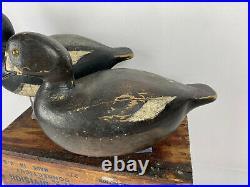 C1950 Julius Mittlesteadt Bluebill Duck Decoy Pair from Buffalo, NY Great Form