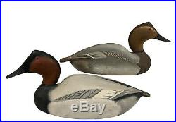 Canvasback Pair Ward Brothers