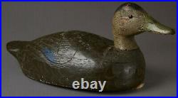 Vintage Black Duck Decoy By Unknown Carver