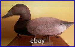 Vintage Branded John Daddy Holly Canvasback Decoy Havre de Grace, MD Maryland