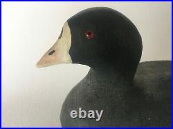 Vtg HERTERS 1893 Series COOT Solid Cedar Wood Confidence Duck Decoy Glass Eyes